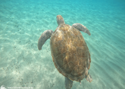 Turtle-Snorkel auf Curacao 02