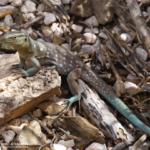 Wildlife auf Cuaracao